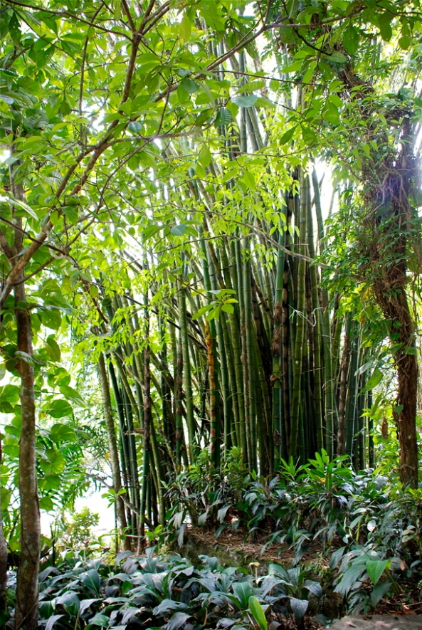 Lush green bamboo plants